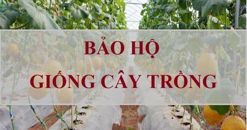 Căn cứ và điều kiện bắt buộc chuyển giao quyền sử dụng giống cây trồng