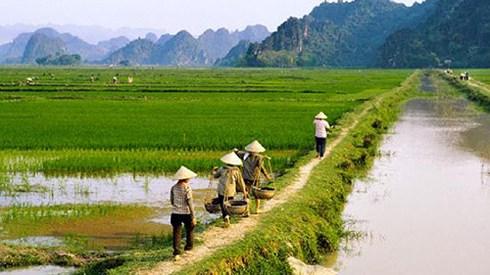 Thời hạn giao đất và hạn mức chuyển quyền sử dụng đất nông nghiệp