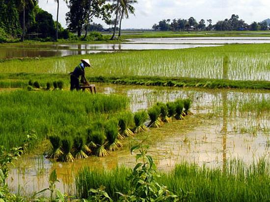 Gia hạn và chuyển nhượng quyền sử dụng đất nông nghiệp có thời hạn