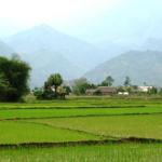 Hạn mức nhận chuyển quyền sử dụng đất nông nghiệp của hộ gia đình, cá nhân