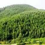 Những chủ thể được phép quản lý và sử dụng đất rừng